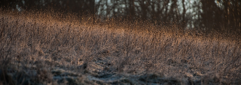 Frosty meadow  in early morning sunrise