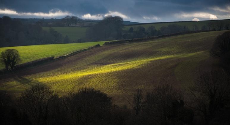 Light on Winter Corn