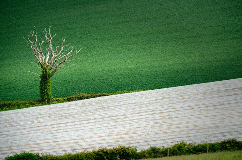 GREEN ON WHITE, warming crop underneath soft felt absorbed into the earth.