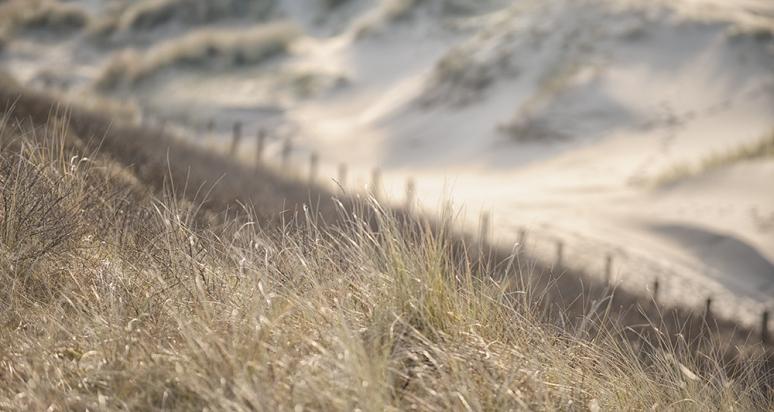 Dune-Landscape