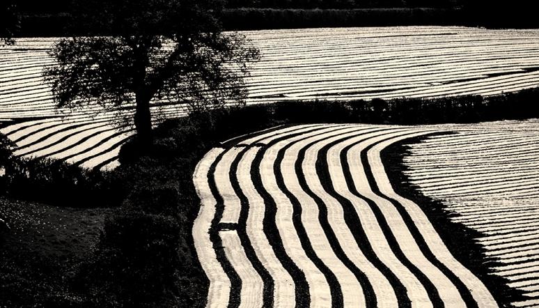 Farming-Striped-landschape-2
