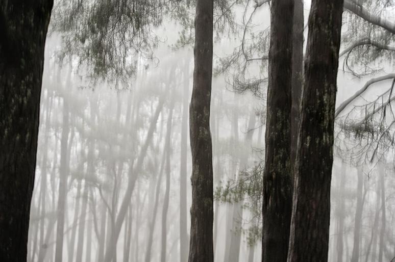 Landscape-Fog-Dartmoor-Npark