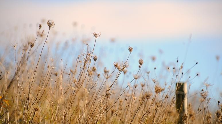 Meadow-December-lgiht