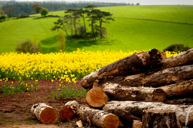 Logs-and-Yellow