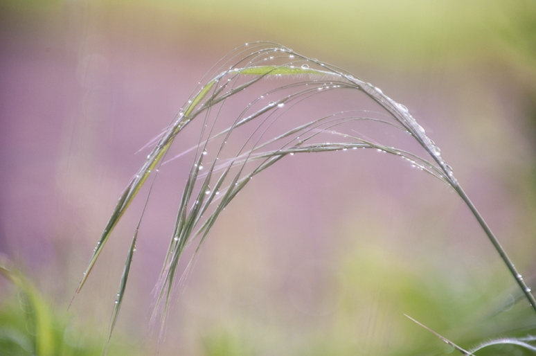 Grass-with-raindrops