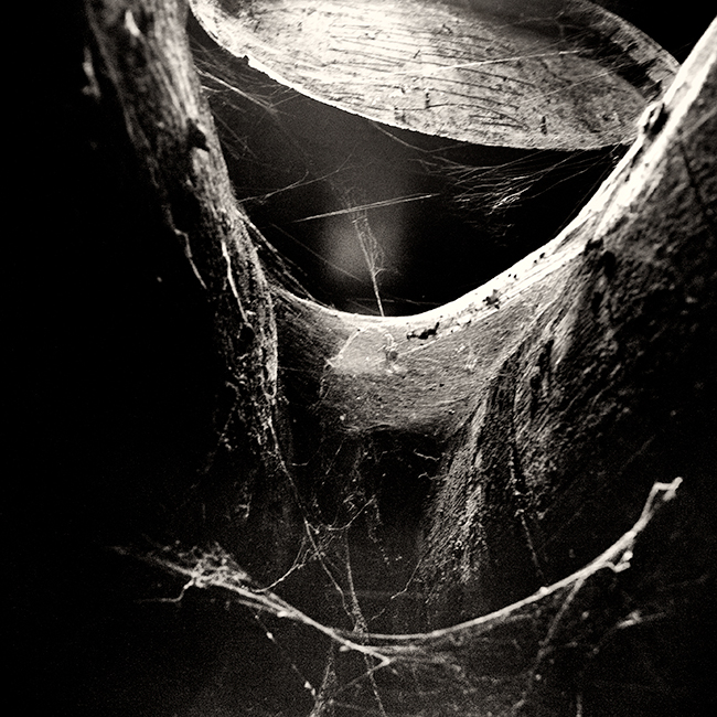 Cobwebs-and-Ciderbarrel