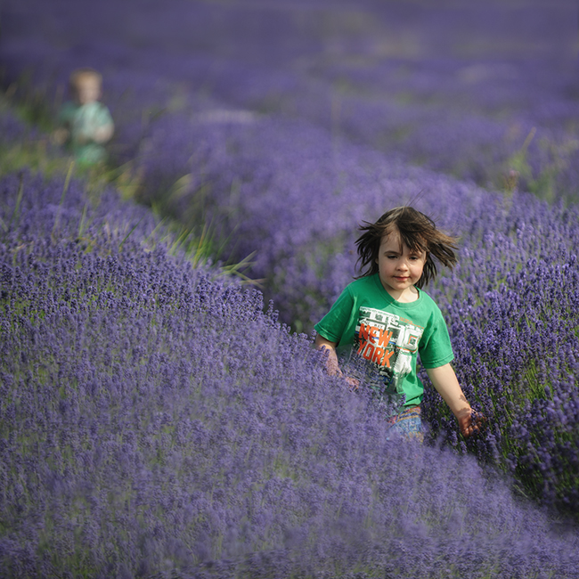 Kids-will-be-kids-in-Lavender
