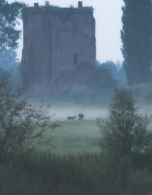 Ruin-deer-mist