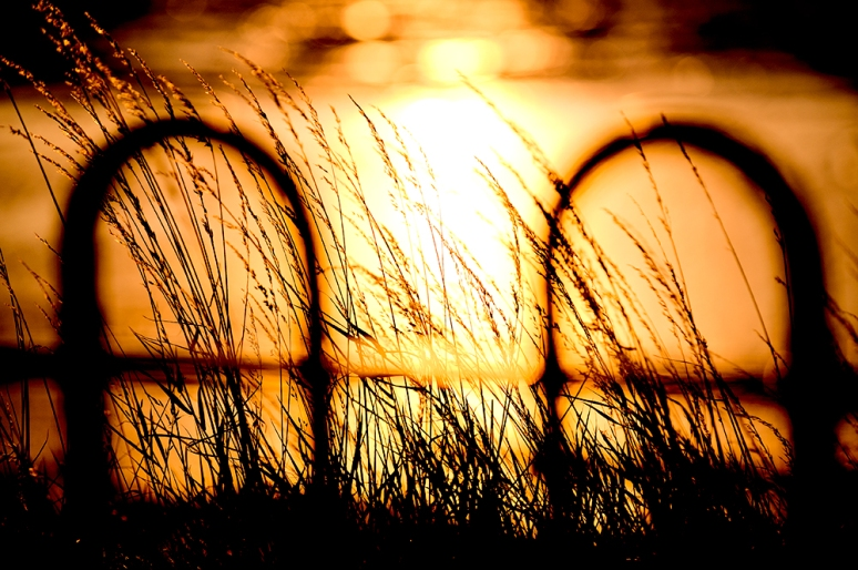 Fence-and-sunset