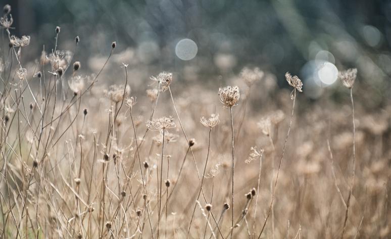 Wild-meadow-in-Winter