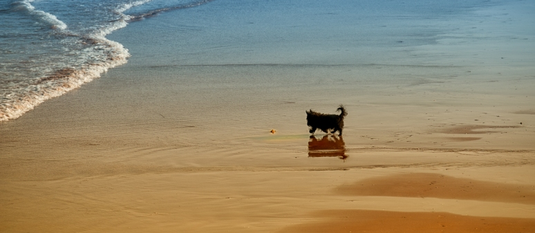 Scottie-on-beach