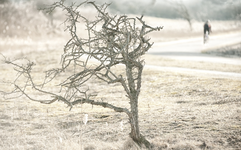 The-thornbush