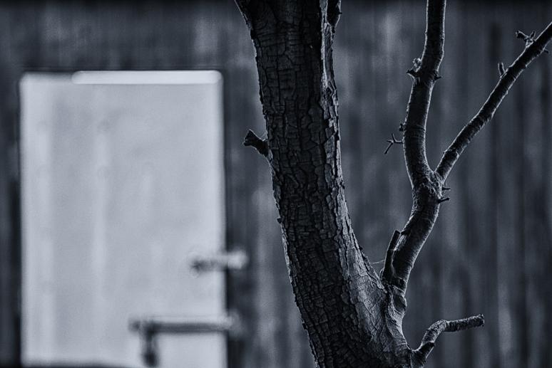 Tree-above-sailing-club