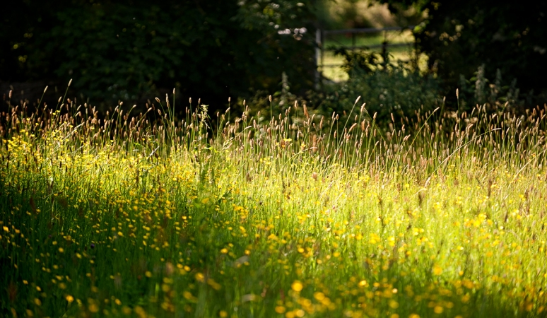 Summer-meadow